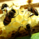 Many Uses Of Beeswax – Natural Solutions