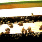 Take A Peek Inside A Bee Hive