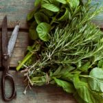 10 Basic Herbs and How To Use Them
