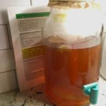 Making Kombucha In My Own Kitchen