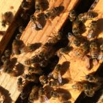 Preparing My Bees For Winter – No Mites Allowed