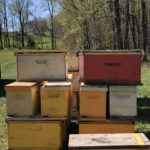 How I Spent My Saturday With The Bees – A Beekeeping Adventure